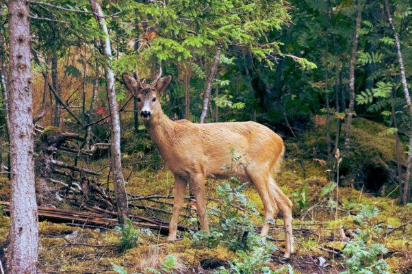 Животные Норвегии флора и фауна в Норвегии